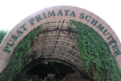 Pusat Primata Schmutzer
