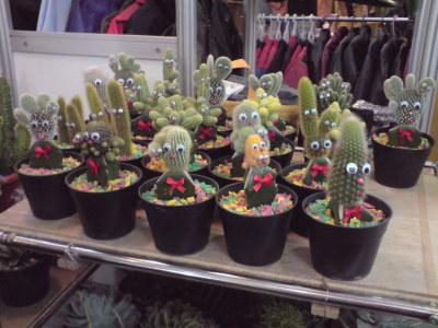 Stand Kaktus