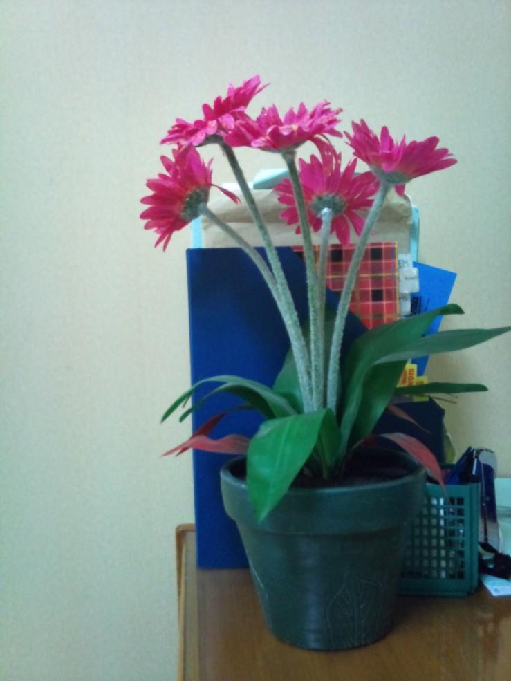 Sebuah Pot Bunga (Buatan)