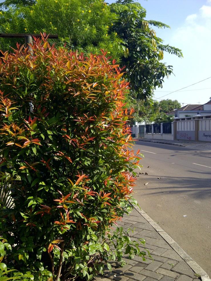 Jakarta Pagi Ini: Pucuk Merah