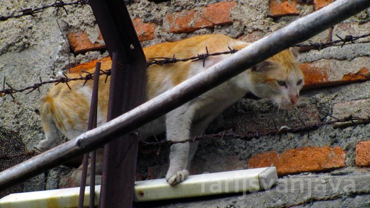 Kucing Menjepitkan Diri