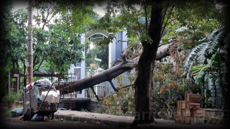 Pohon Tumbang Akibat Angin Kencang