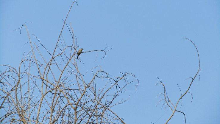 Seekor burung bertengger di ranting kering