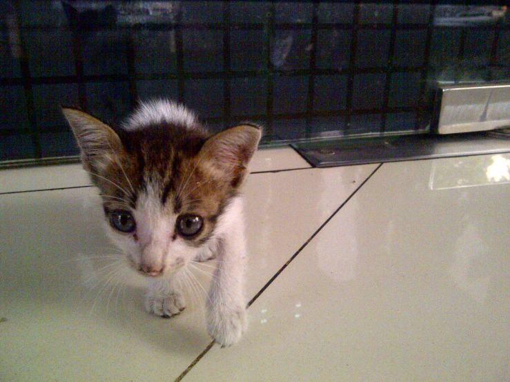 Anakan Kucing #1