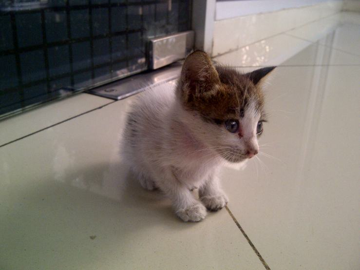 Anakan Kucing #2